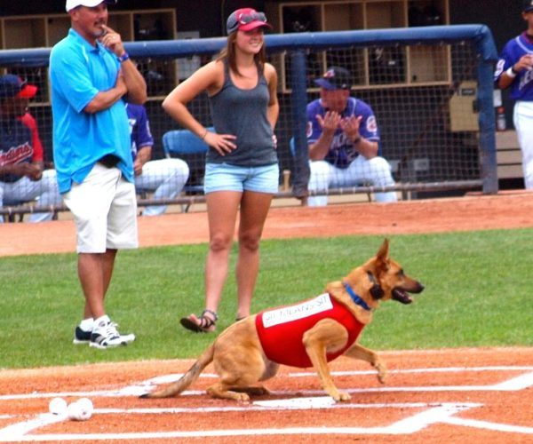 Train your dog in Cleveland
