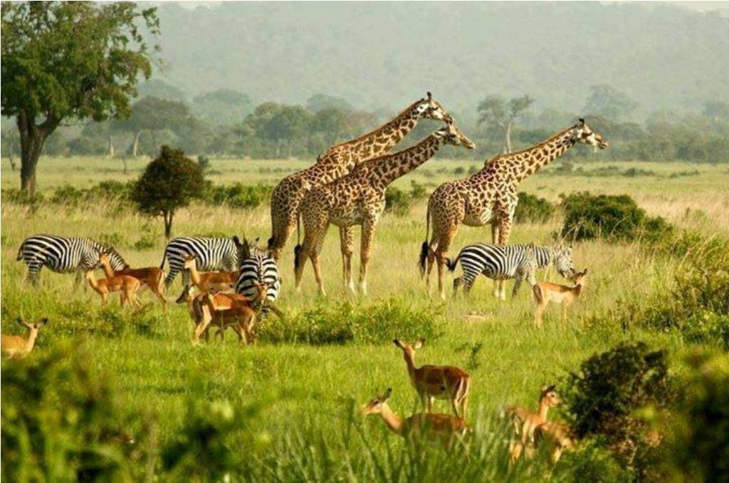 Travel to Uganda